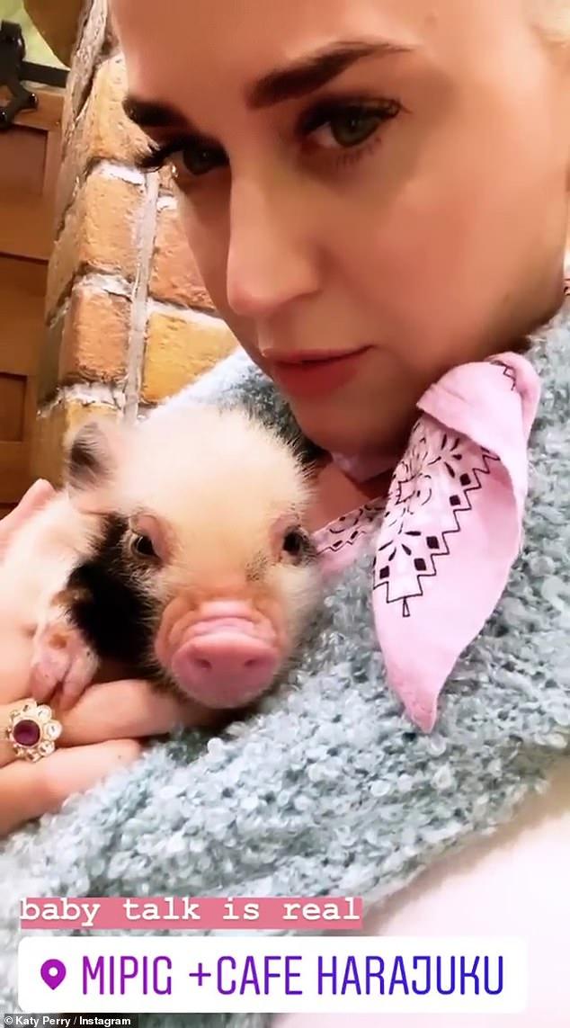 Katy對豬仔愛不釋手。