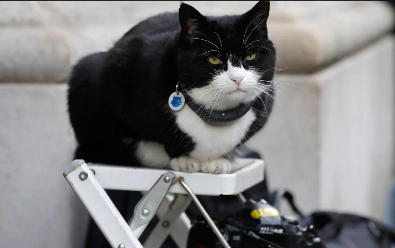 英國外交部的「首席捕鼠官」帕默斯頓(Palmerston)。AP