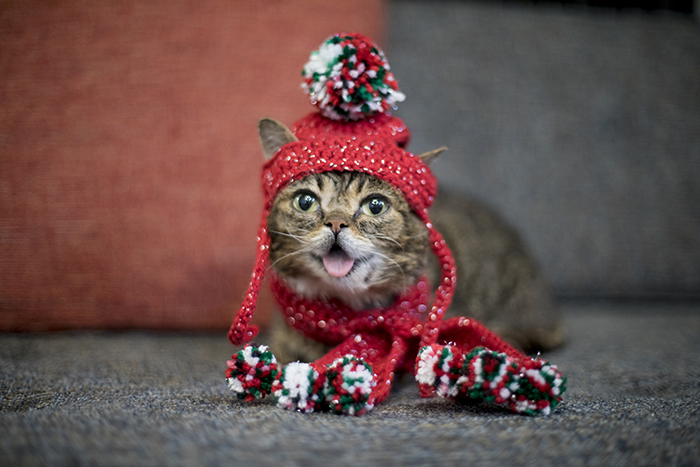 吐舌的小貓Lil Bub。網上圖片