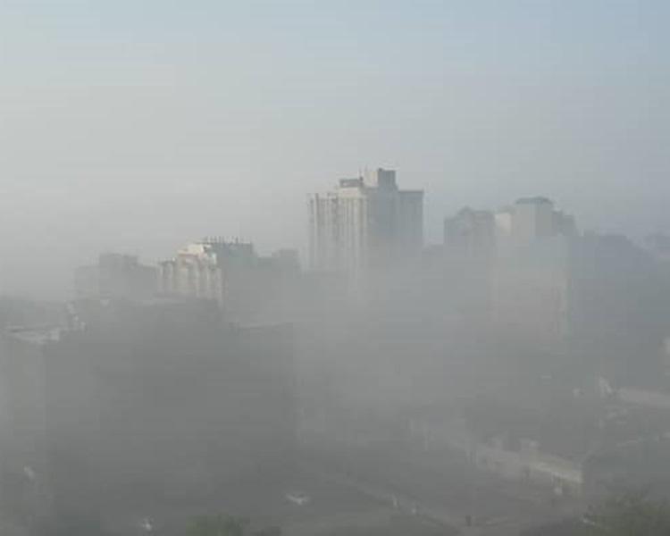 有網友表示,「因為霧霾太大都迷路了」。資料圖片