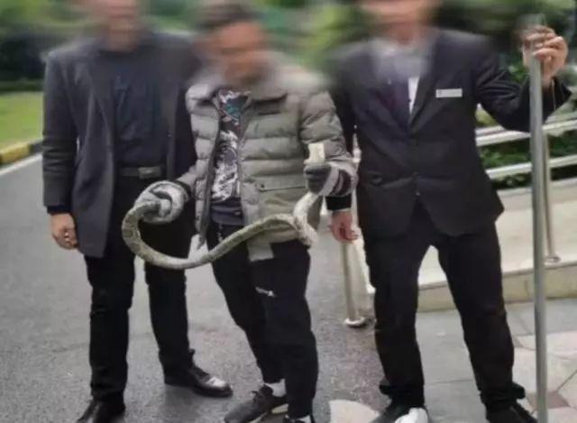 管理人員將蛇捉走後交回予蛇的主人。網圖