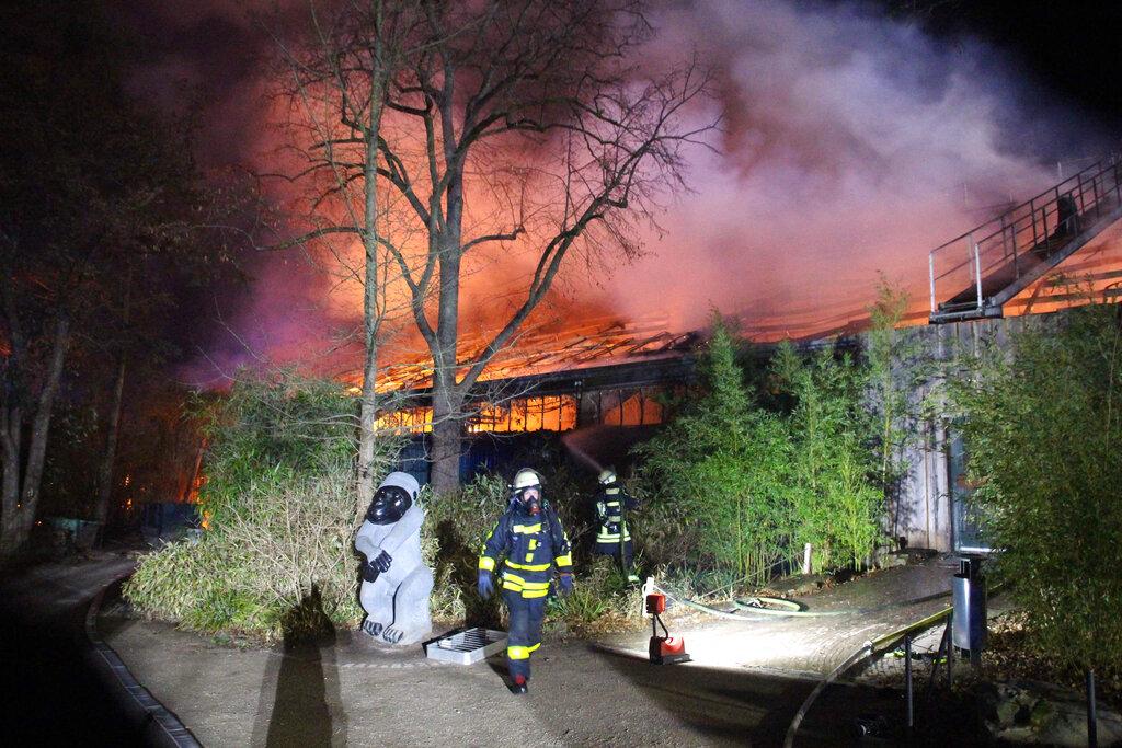 德国有动物园发生大火致烧死逾30只动物。图