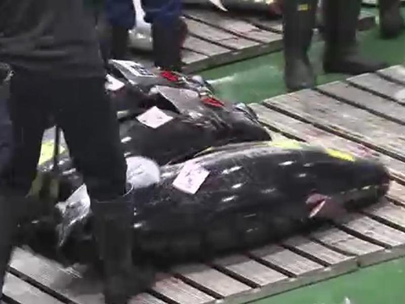 丰洲市场周日上午进行令和时代首场新春吞拿鱼拍卖。NHK