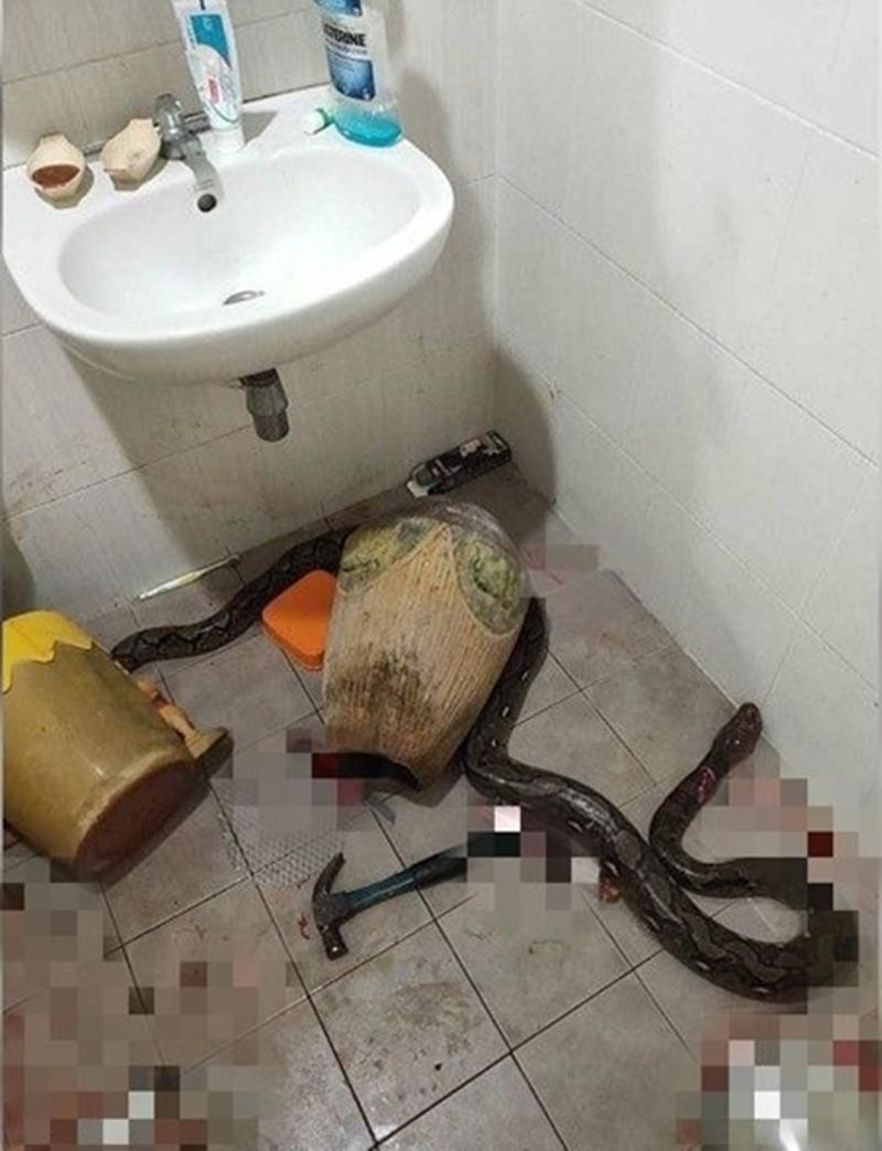 泰国妇人上厕被大蛇咬伤。网图