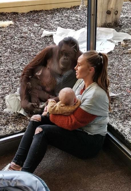 母猩猩温柔地望着男婴。网图