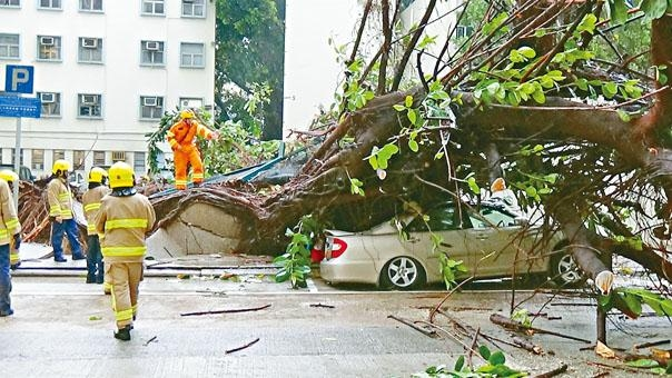 海馬襲港威力驚人,昨全港發生約二百宗塌樹意外,美孚大樹塌下壓毀私家車及的士。