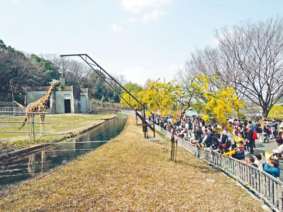 適逢八十周年慶,到訪東山動植物園的人絡繹不絕。