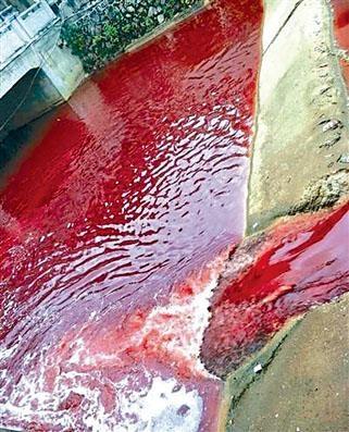江西九江河水突遭豬血污染變血紅。