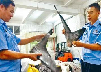 江門海關緝私局調查發現一個以港人為首的大型走私魚翅集團。