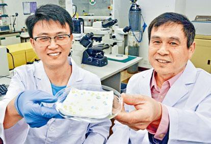 港大工程學院機械工程系教授王立秋及博士後研究員朱平安研發出一種嶄新結構物料,應用在不同表面上可防水防油。