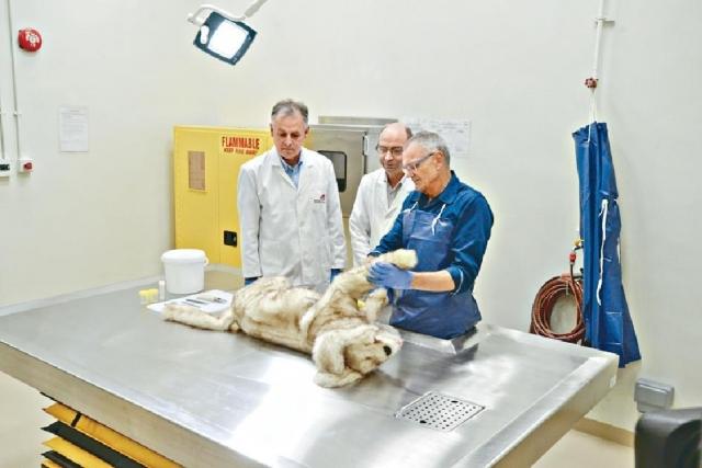 ■城大耗資逾千萬元建成的動物醫療檢驗中心,日前正式投入服務。