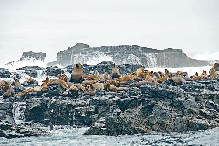 ●懶洋洋的海豹最愛享受日光浴!