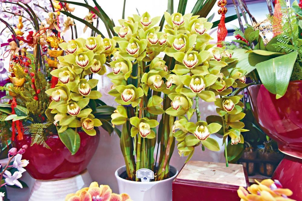 失竊花店出售名貴蘭花,其中一盆賣五千八百元。