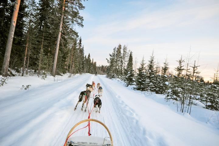 冬季遊一般以六隻雪橇犬拉車。