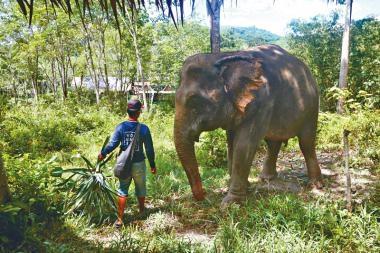 布吉大象樂園