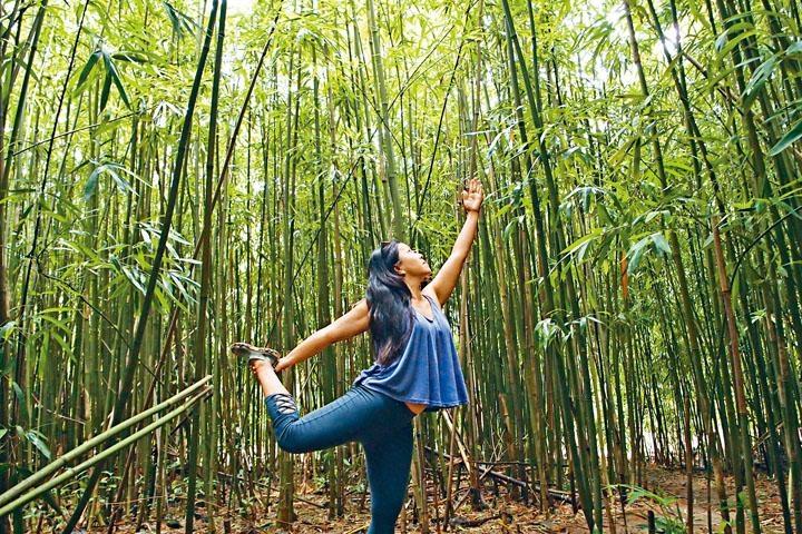 竹林內處處可做瑜伽。