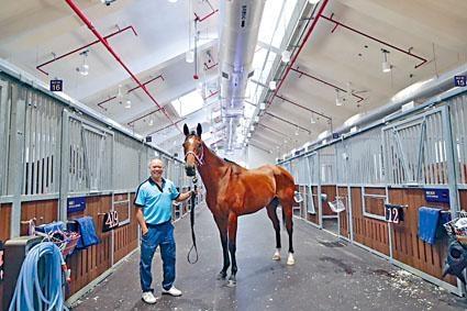 「發盈喜」是首批進駐從化的馬匹之一。