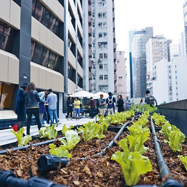 體驗城市耕作
