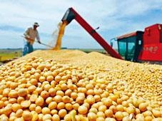 ■大豆是中國反制美國的頭號制裁目標。