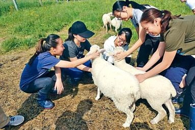 林雋希表示今年暑假到美國康奈爾大學獸醫學院,進行為期五周的實習活動。