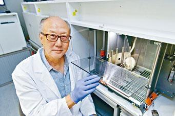 城大生物醫學系教授李嬰在探索大腦神經星形膠質細胞,對疼痛造成決策障礙的機制方面取得突破。