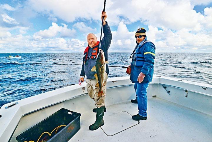 ●遊人難得捕鱈,當然要拎着七、八磅重的戰利品合照。