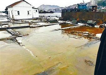 海港漁民的養殖區域被黃色的油污覆蓋。