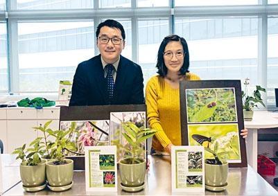 張浩及羅敏儀均表示,把原生植物用作綠化城市,較種植外來品種可減低保養成本。