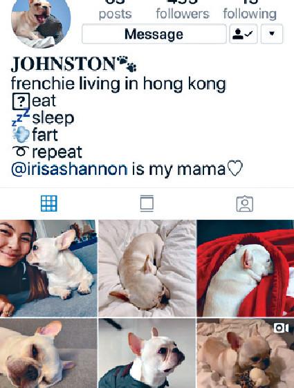 ■Irisa幫愛犬開嘅ig,BB Johnston好得意。