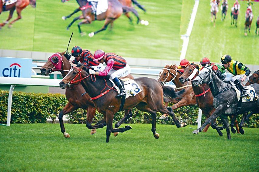 「夏威夷」評分與近績都勝於今屆打吡的其他參戰馬,蔡約翰亦直言具冠軍相。