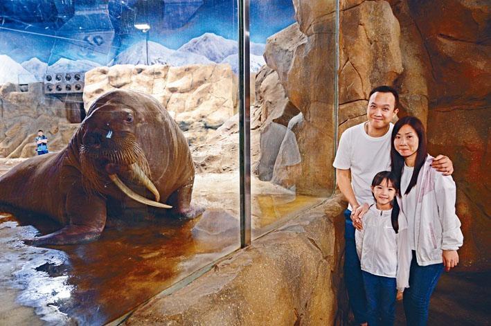 親手餵飼及觸摸海象後,可與這位海洋巨星合照留念。