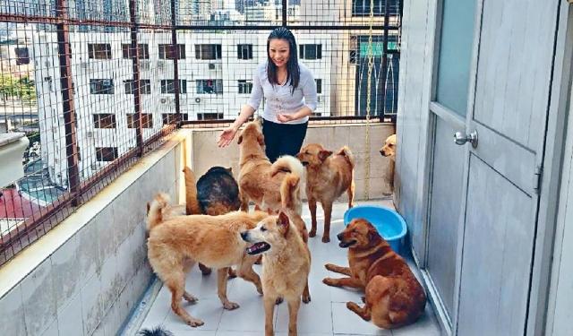 ■陳秀姚多年來照顧貓狗,已幾近耗盡積蓄。