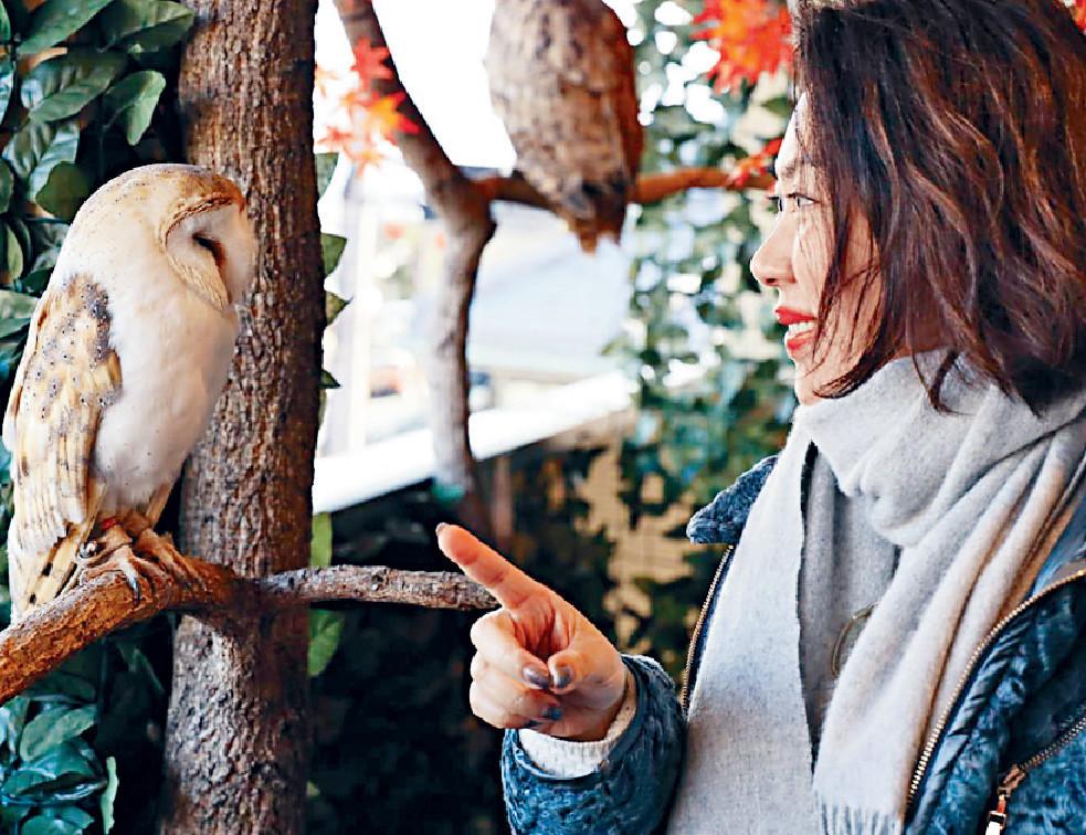 ■她首次幫襯貓頭鷹餐廳,貓頭鷹非常可愛。