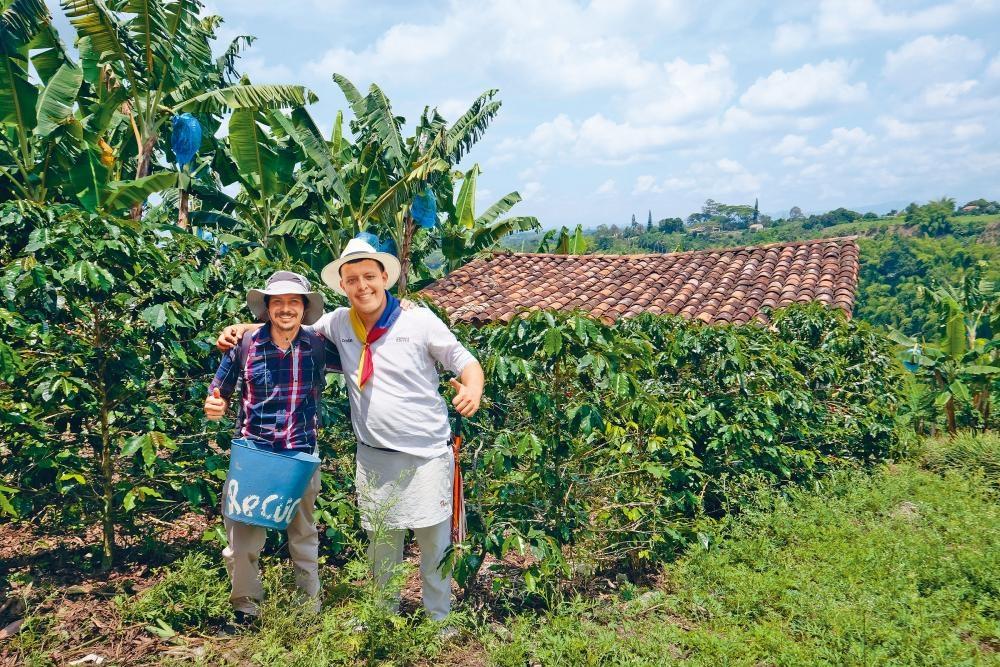 在莊園內可一嘗人手採摘咖啡豆的滋味。