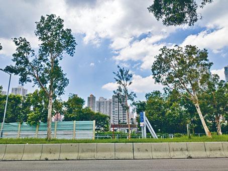 ■當局在「山竹」後已補植萬棵幼樹,元朗十八鄉公路中間被移除的樹木位已補種幼樹。