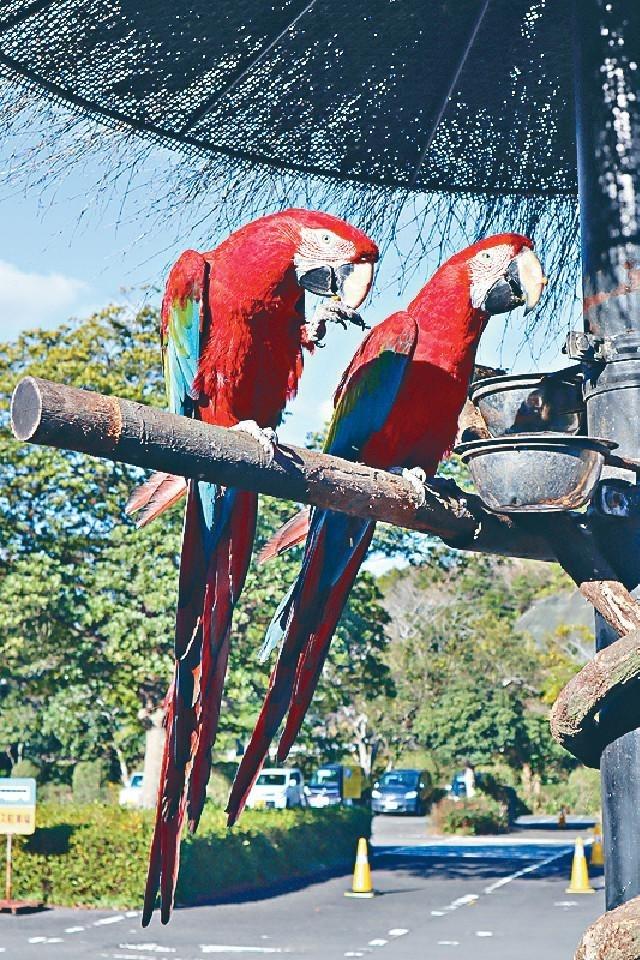 ■門前有色彩斑爛的鸚鵡接待遊客。