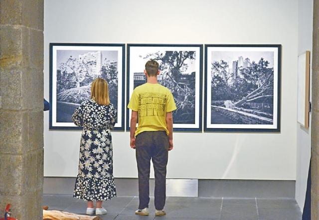 ■颱風山竹去年吹倒六萬棵樹木,啟發策展人黃熙婷構思《見樹亦見林》展覽。