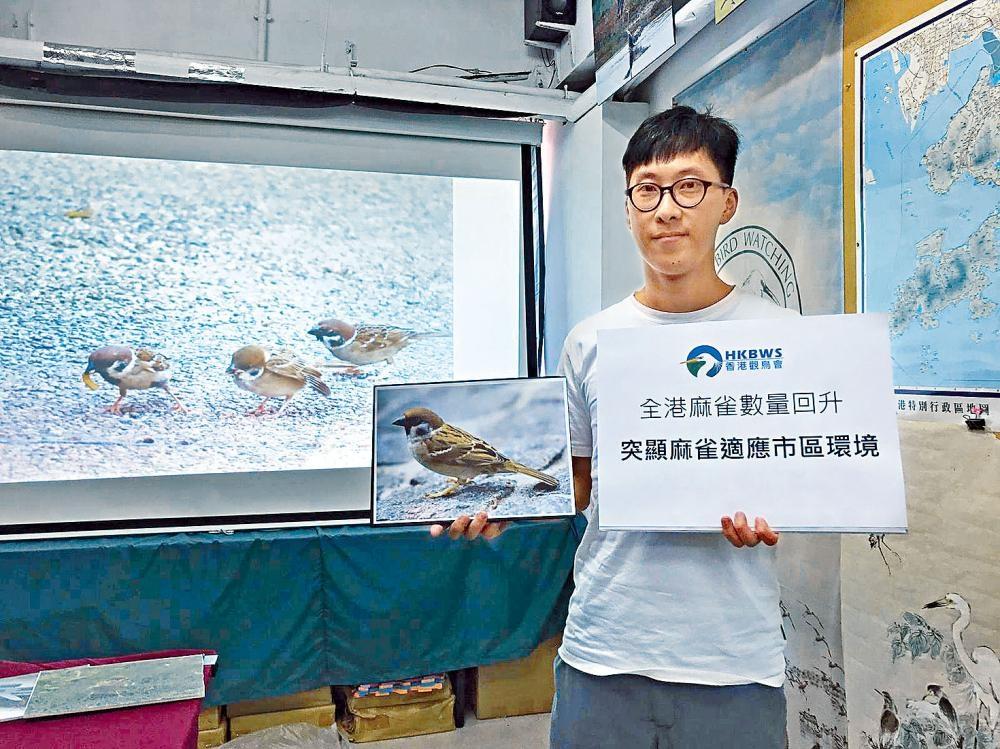 香港觀鳥會估算今年本港約有三十萬隻麻雀 。