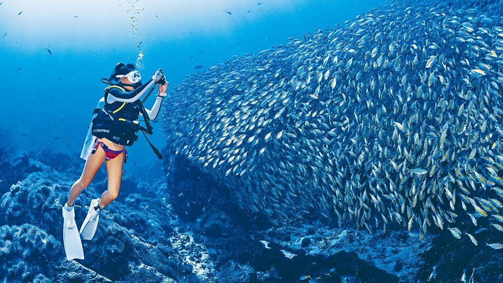 龜島的海底世界果然精采又繽紛,已被開發的潛點多達二十個,值得大家前來下潛探索。