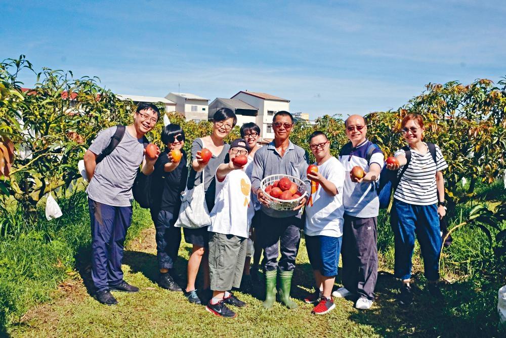 台南市玉井區是台灣有名的芒果之鄉,可在果園內體驗採摘芒果的樂趣。
