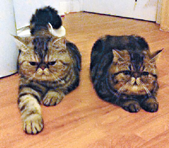 ■袁文傑的愛貓囡囡及囝囝。