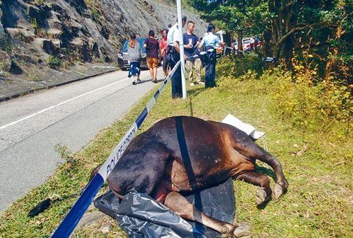 ■一度惹被虐殺黃牛屍體移至路邊。
