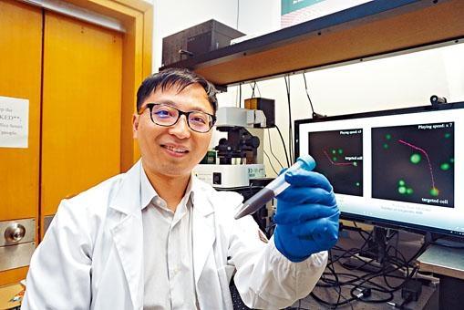 中大機械與自動化工程學系教授張立,研發可攜帶藥物的磁性生物合成納米機械人。