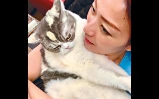 愛貓任攬陪住過中秋 Sammi讚:吃了柔順劑